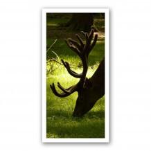Plaque photo décorative PVC Cerf en velours au gagnage