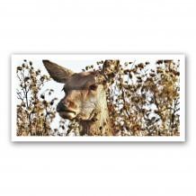 Plaque photo décorative ALU Biche en portrait