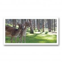 Plaque photo décorative PVC Faons en forêt